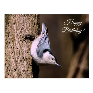 Happy Birthday White Breasted Nuthatch Postcard