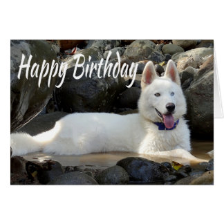 Happy Birthday White Siberian Husky Puppy Dog Card