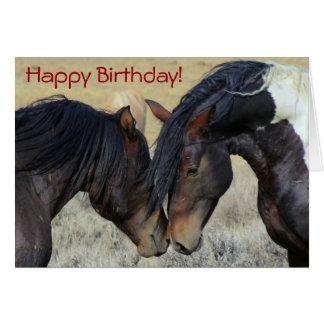 Happy Birthday Wild Horses Greeting Cards