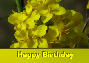 Happy Birthday Yellow Flowers Invitations Stationery Zazzle Ca