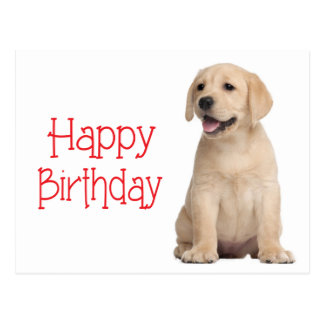 Happy Birthday Yellow Labrador Retriever Postcard