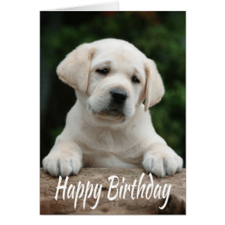 Happy Birthday Yellow Labrador Retriever Puppy Dog Card
