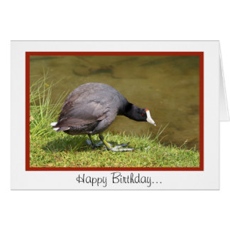 Happy Birthday-You Old Coot Card