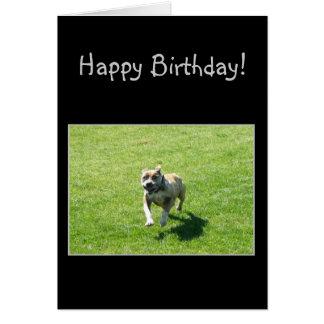 Happy Bithday Pitbull greeting card