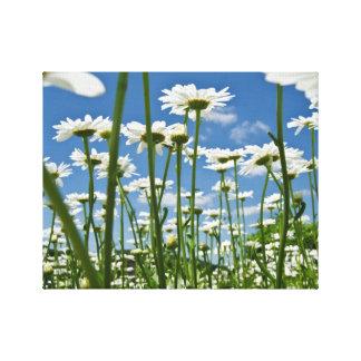 Happy Daisies Canvas