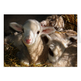 Happy Easter - Easter Lambs Greeting Card