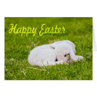 Happy Easter, Little Lamb In Green Grass Greeting Card