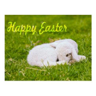 Happy Easter, Little Lamb In Green Grass Postcard