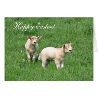 Happy Easter Two Lambs greeting card