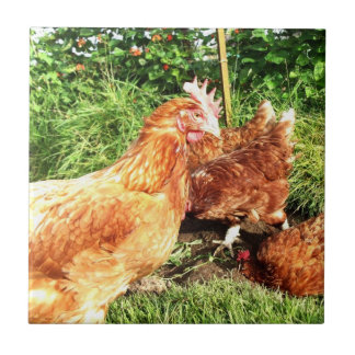 Happy Free range ex-battery chickens Tile