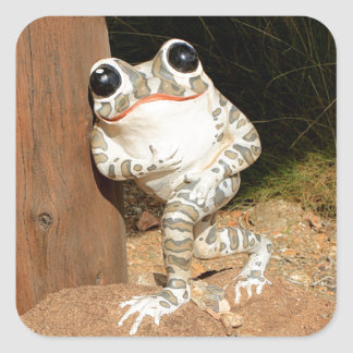 Happy frog with big eyes square sticker