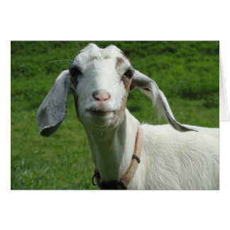 Happy Goat Card