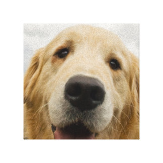 Happy Golden Retriever Canvas Print