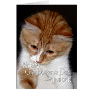 Happy Grandparents Day Grandma Cute Cat Card