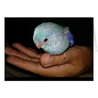 Happy Hatch Day Bird Birthday Greeting Card Art