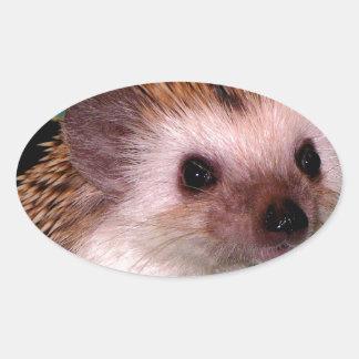 Happy Hedgehog Oval Sticker