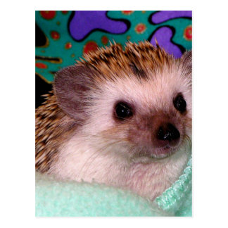 Happy Hedgehog Postcard