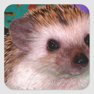 Happy Hedgehog Square Sticker