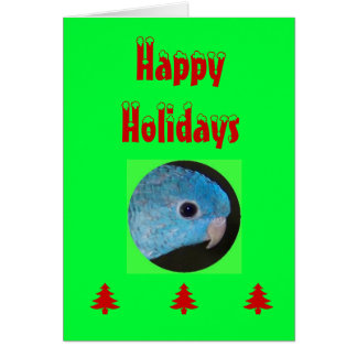 Happy Holidays card, linnie parakeet Card