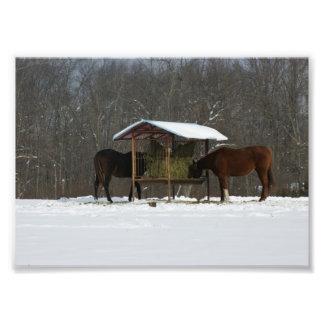 Happy Horses  5x7 Photographic Print