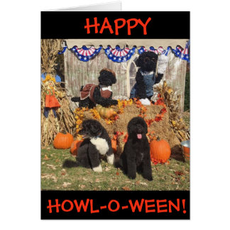 Happy Howl-O-Ween!  Bo and Sunny - Greeting Card