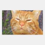 Happy Kitty Kat! Rectangle Stickers
