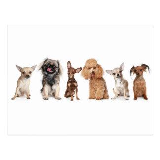Happy Little Dogs Postcard