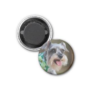 Happy Miniature Schnauzer Puppy 1 Inch Round Magnet
