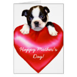 Happy Mother's Day Boston Terrier  Card