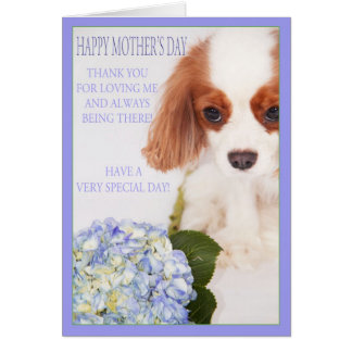 Happy Mother's Day Cavalier With Hydrangea Card