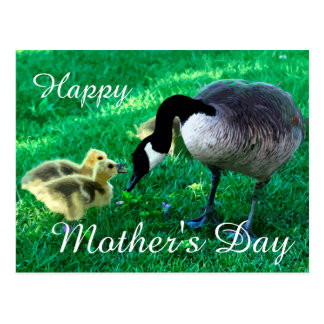 Happy Mother's Day - Mother Goose Postcard