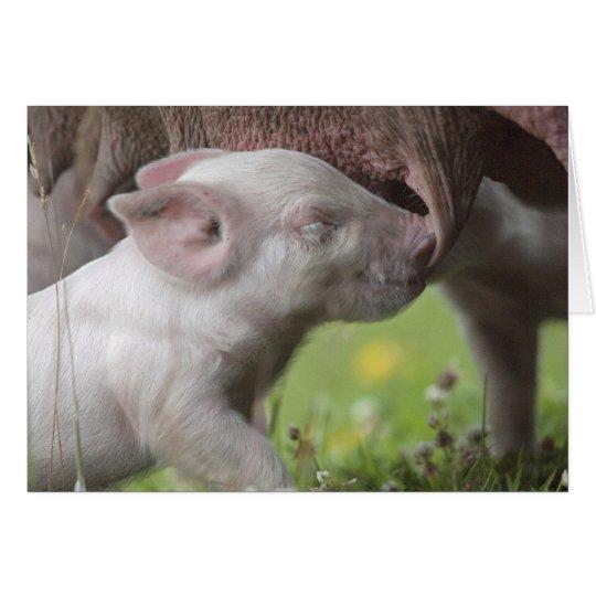 Happy Mother's Day Nursing Piglet Card