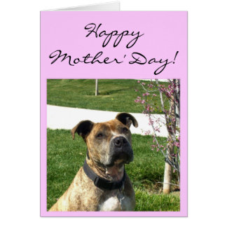Happy Mother's Day Pitbull greeting card