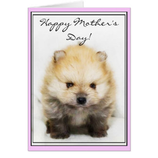 Happy Mother's Day Pomeranian puppy greeting card