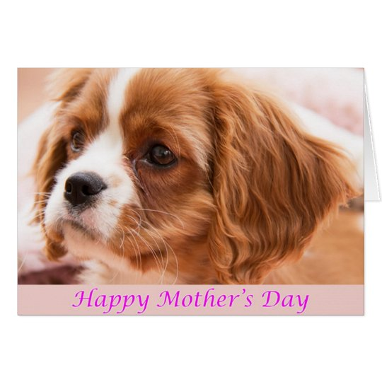 Happy Mother's Day Puppy CKCS Card