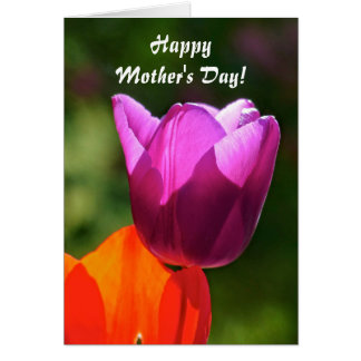 Happy Mothers Day! Tulip in bright light Card