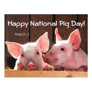 Happy National Pig Day! (March 1) Postcard