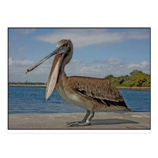 Happy Pelican Postcard