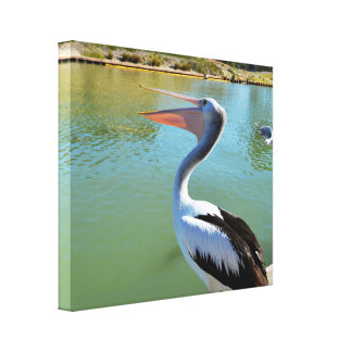 Happy Pelican Singing Out A Storm, Canvas Print