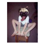 Happy pug-headed kid. post cards