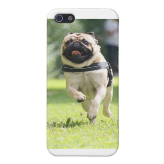 happy pug iPhone 5 cover