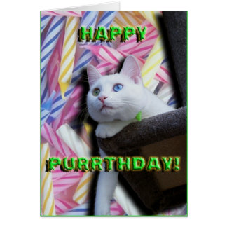 Happy Purrthday! Card