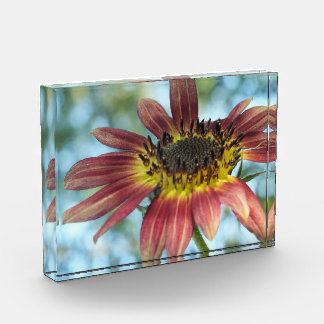 Happy Red Sunflower in Acrylic Photo Block