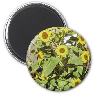 Happy Sunflowers 2 Inch Round Magnet