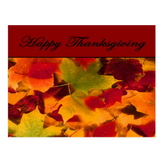 Happy Thanksgiving Autumn Leaves Postcard