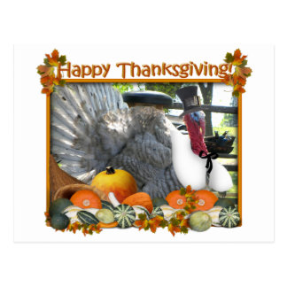 Happy Thanksgiving from Tom the Pilgrim Turkey Postcard