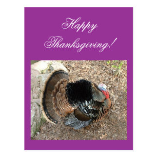 Happy Thanksgiving! - Thanksgiving card Postcard