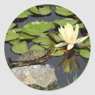 Happy Turtle in a Lily Pond Classic Round Sticker