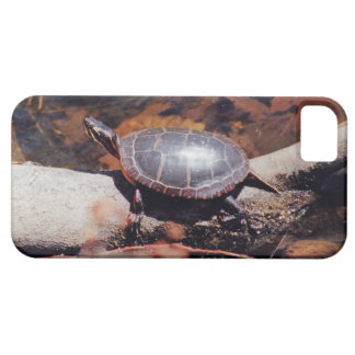 Happy Turtle iPhone 5 Cover