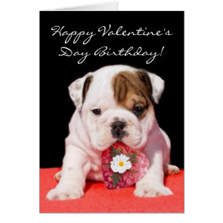 Happy Valentine's Day Birthday bulldog puppy card